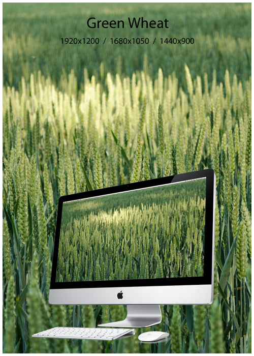green_wheat_by_law59000-d3kd1im